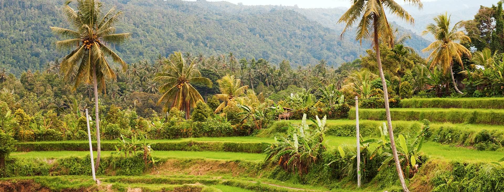 Bestil en reise til Bali i Indonesia med Ving