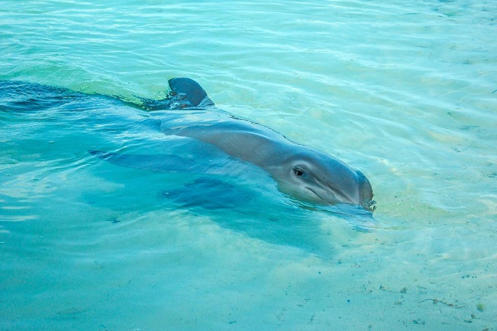 Se delfiner i vannet!
