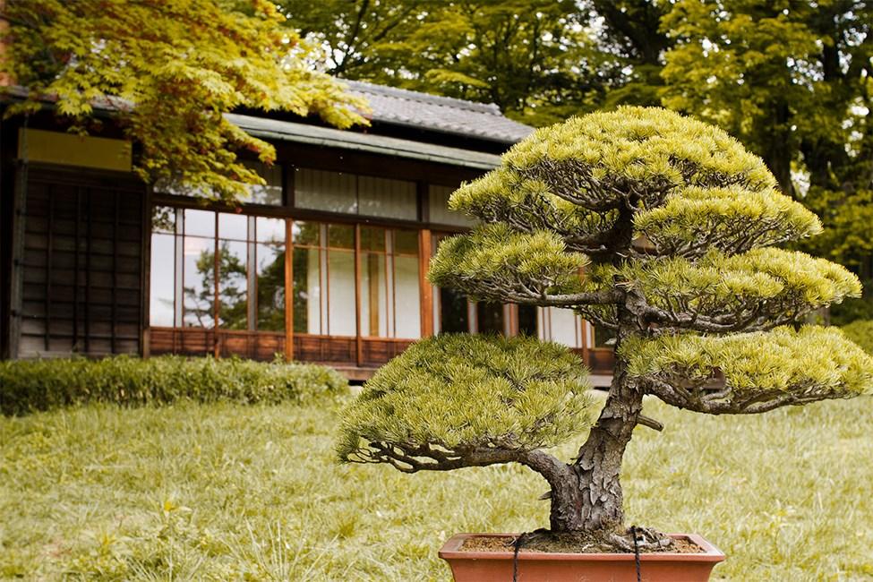 Den indre hage i Meiji-tempelet, Tokyo