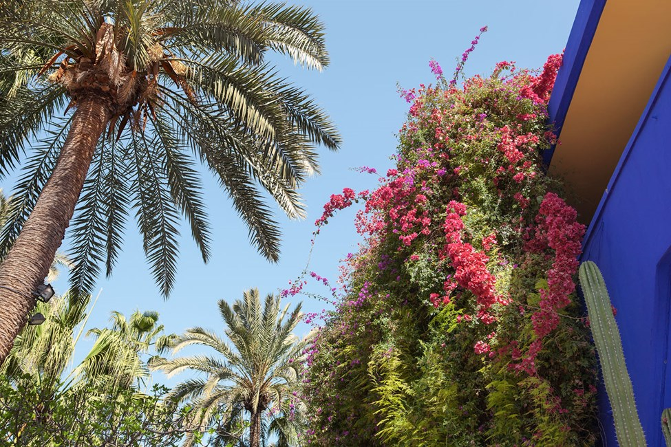 Den botaniske hagen Le Jardin Majorelle i Marrakech
