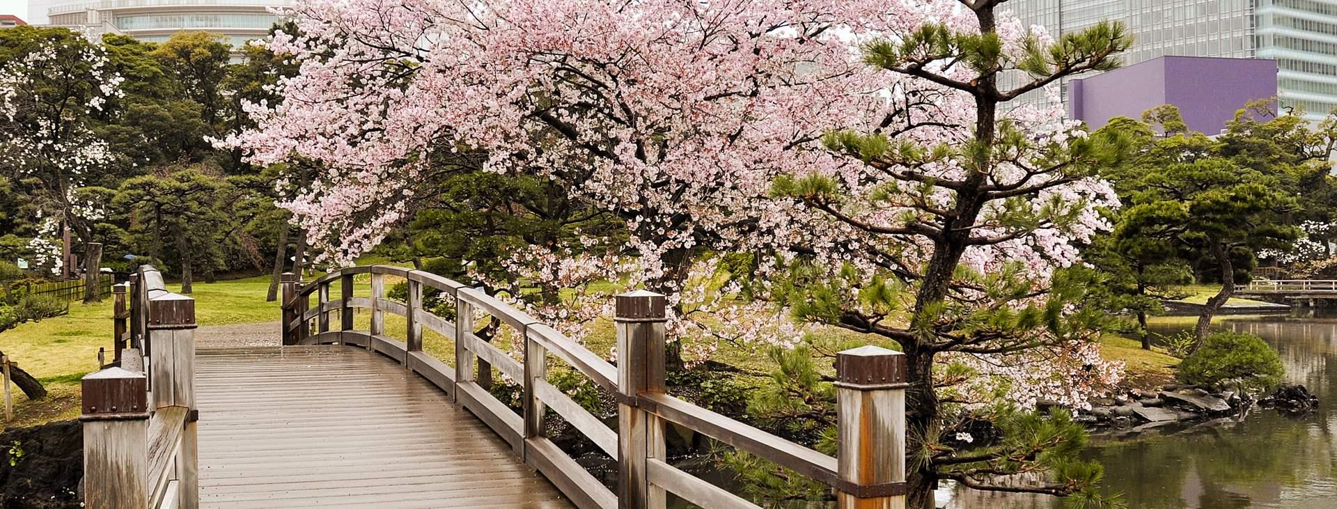 Bestill en reise til Japan med fly og hotell