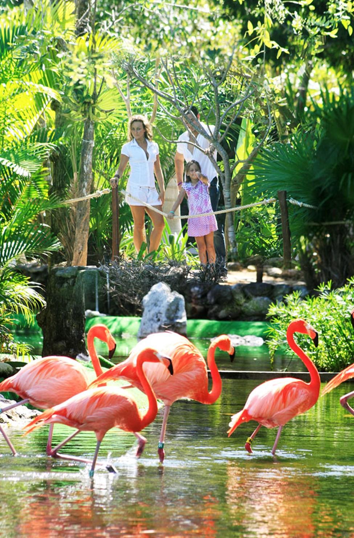 Flamingoer på Grand Palladium Colonial White Sand Resort & Spa