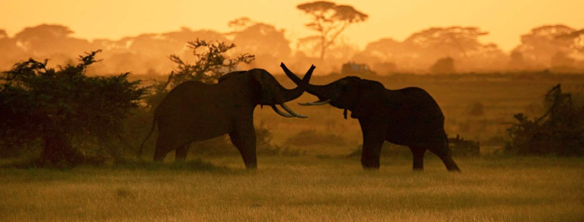 Bestill en reise til solsikre Afrika med Ving!