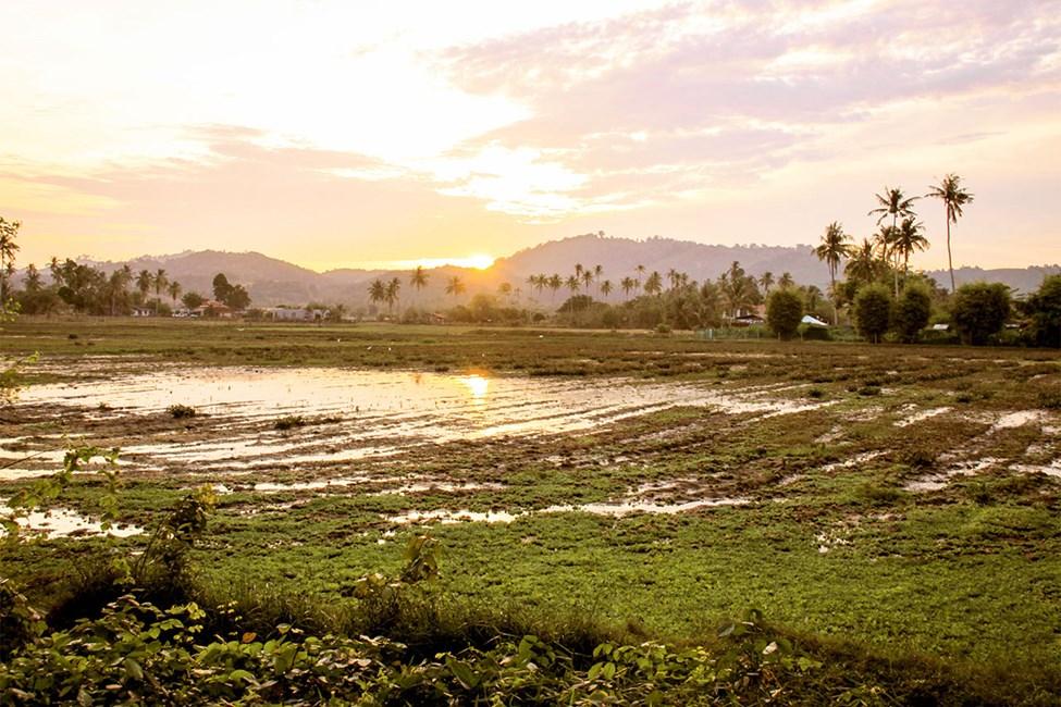 Risåker i Langkawi