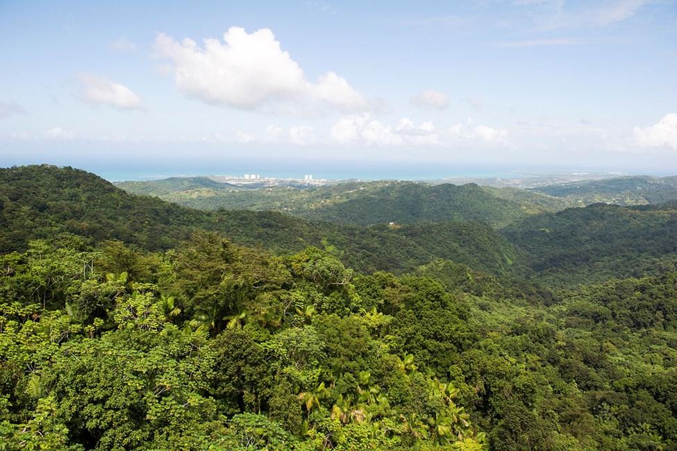 Nasjonalparken El Yunque