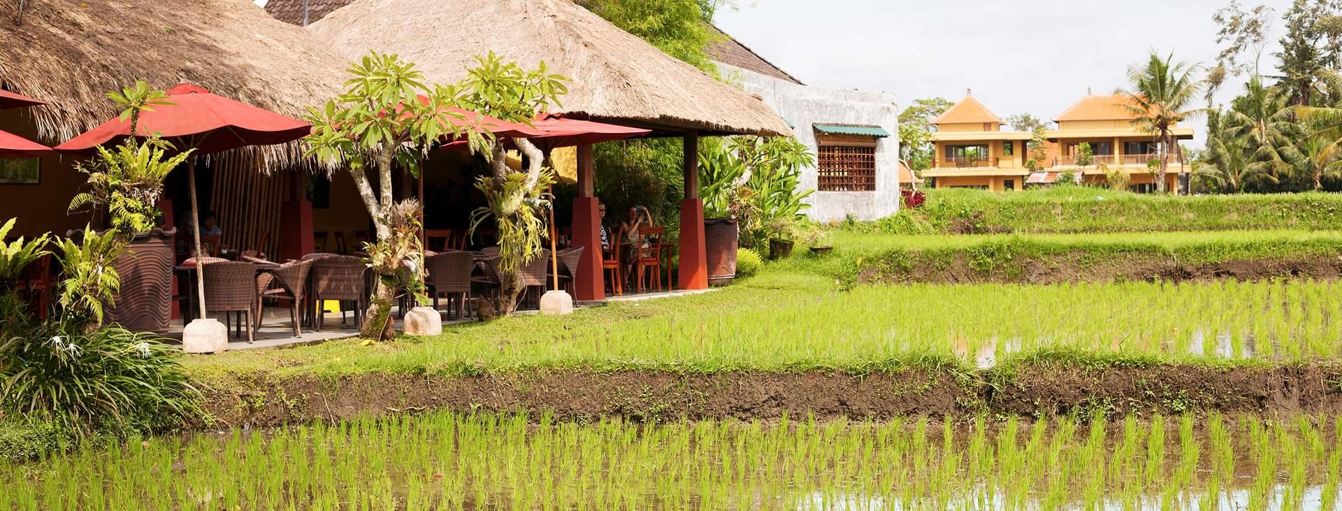 Reis med Ving til Ubud på Bali i Indonesia