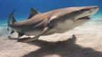 Hvor er haiene?  – kan bestilles hjemmefra